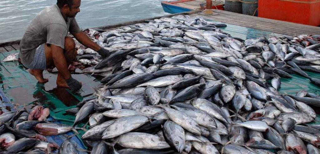 balık bolluğu nedeniyle balık bol yenebilecek