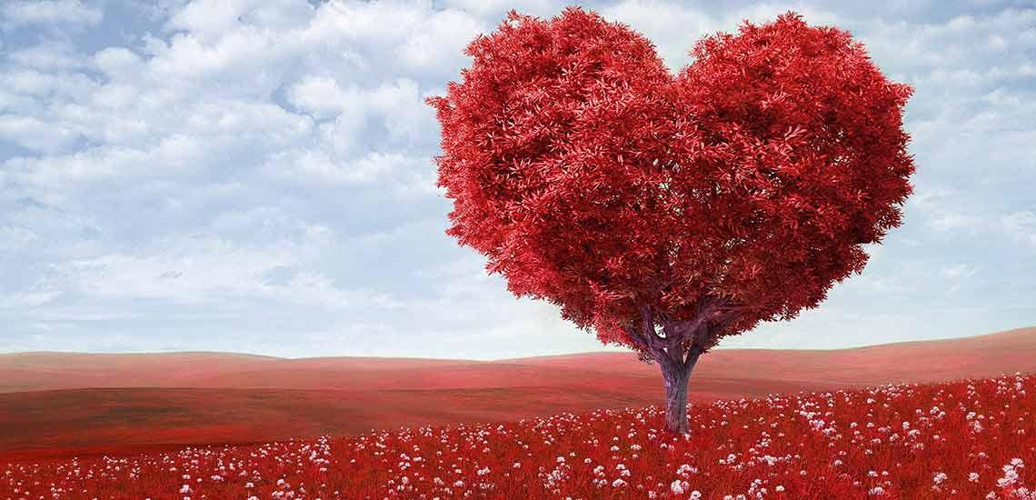 seni sevmeyen birini kendine nasıl aşık edersin